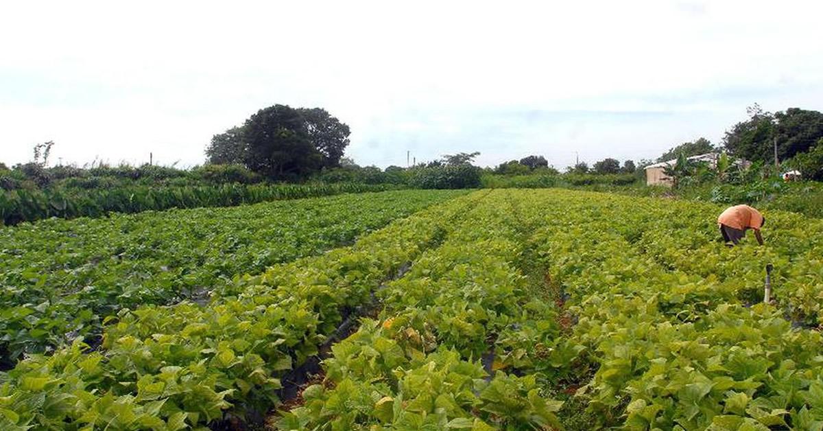 Garantia-Safra: Governo libera auxílio para agricultores